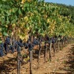 Villa Emo Capodilista – Saveurs / le vin est lent (slow wine): Ca' Emo est l'un des meilleurs vins du monde, selon Robert Parker