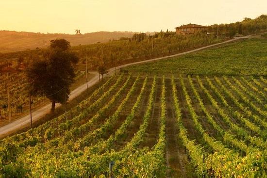 Les 15 meilleurs vignobles italiens visiter blog ville in for Les meilleurs cuisinistes italiens