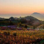Les Monts Euganéens : vin, spas et voies antiques au cœur de l'Italie