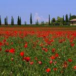 C'est le printemps : La « saison secrète » en l'Italie dans 5 villas de luxe