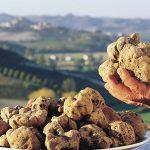 Les truffes en Italie : Les truffes blanches d'Alba & les truffes noires italiennes