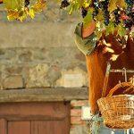 Saveurs d'Italie : vins italiens sophistiquées et raffinés