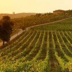 Les 15 meilleurs vignobles italiens à visiter